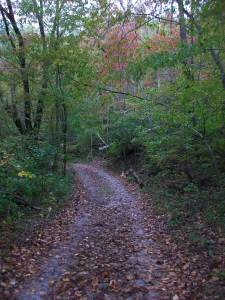 Trail to my Hambidge studio. The seasons changed while I was here!