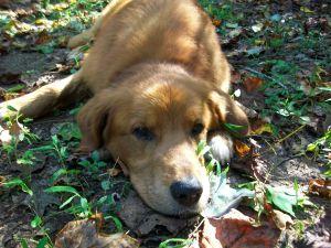 Hambidge puppy.